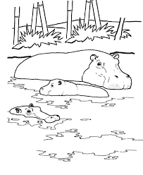 printable hippopotamus coloring pages wild african animal