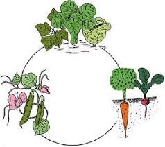 crop rotation grow your own