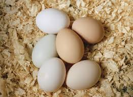 starting an egg business on your small farm