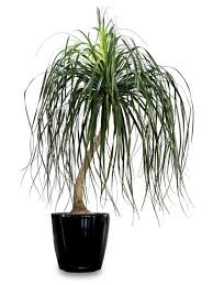 top house plants the new york times top 15 kill proof houseplants gardening