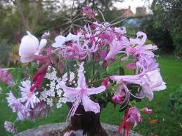 in a vase on monday la vie en rose the blooming garden