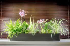 indoor planters portfolio the plant pot shop