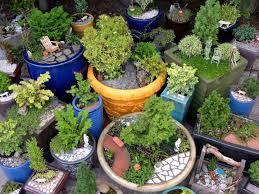 may 2011 the mini garden guru from twogreenthumbs com