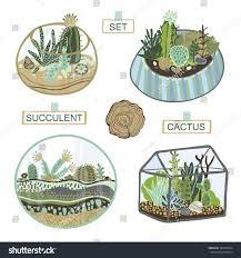 succulent cactus terrarium set stock vector 389256364 shutterstock