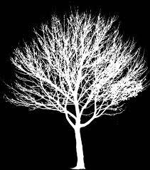 raster images trees in elevation cadtutor