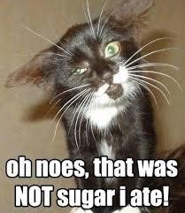 Eat Meme - cat didn t eat sugar i can has cheezburger