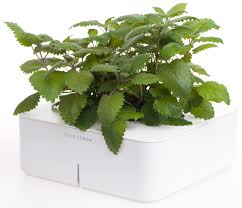 Click And Grow by Coltivare Piante Anche In Inverno Con Click And Grow
