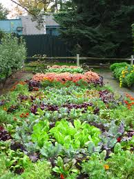 blend a variety of vegetables together in a veggie garden to