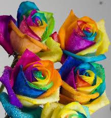 colorful roses colorful roses colorful roses hande aksoy flickr