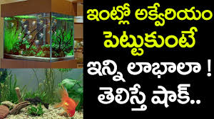 home and office decor we must have a fish aquarium at home and office best tips in