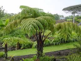hawaii plants imiloa hilo attractions endemic plants