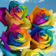 colored roses rainbow roses for sale free delivery rainbow colored roses