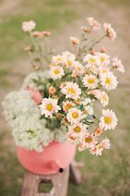 104 best daisies images on pinterest flowers daisies and daisy