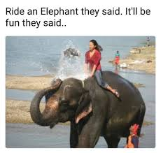Elephant Meme - ride an elephant they said funny memes daily lol pics