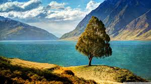 tree by the lake 4k hd desktop wallpaper for 4k ultra hd tv