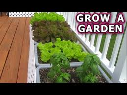 how to grow a container garden from seeds vegetable plant start