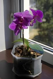 best 25 growing orchids ideas on pinterest indoor flowers