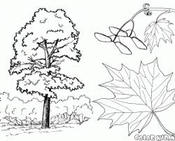 99 ideas tree trunk coloring pages on spectaxmas download