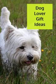the 25 best christmas gifts for dogs ideas on pinterest
