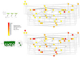 frontiers correlation networks visualization plant science