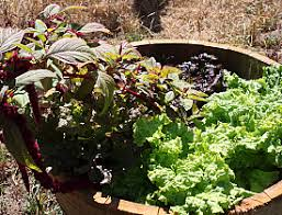 Container Gardening For Food - how to grow pounds of food in a tiny garden networx