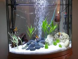 live plants freshwater aquarium aquarium design ideas