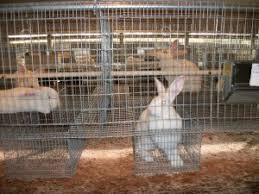 Kims Rabbit Hutch Rabbits In Rabbitry Cage Drop Nest Boxes And Large Rabbitry Set
