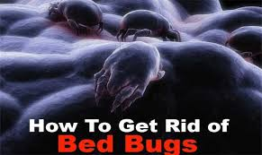 Bed Bug Home Remedies Home Remedy To Get Rid Of Bed Bugs The Health Benefits Of Foods