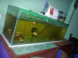 coffee tables breathtaking fish tank coffee table aquarium