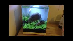 new nano tank for shrimps youtube