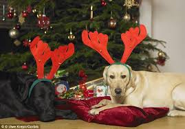 pets get more presents than partners say pets at home