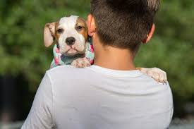 rescue vs breeder u2013 making the right choice simply for dogs