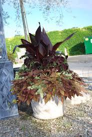 38 best dark leaves images on pinterest garden container garden