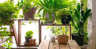 indoor plants a growing home design trend design blog by hom
