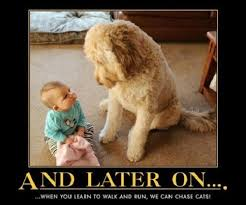 Cute Pet Memes - cute archives humordog funny dog pictures funny dog memes