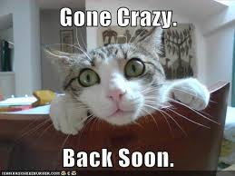 Crazy Cat Meme - cat gone crazy funny pictures quotes memes funny images