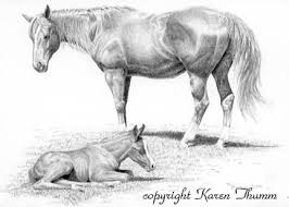 pencil drawing mare foal pasture horses graphite