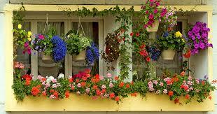 Hanging Flowers 10 Super Hanging Flower Basket Ideas Garden Talk Nurserylive