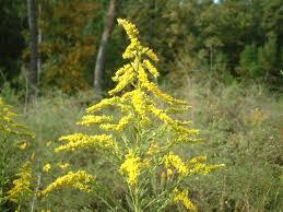 ontario native plants wild flowers on eagle mountain