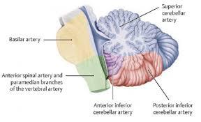 Base Of The Skull Anatomy Vascular Anatomy Neuroradiology
