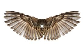 Bird Wing - bird wings pictures images and stock photos istock
