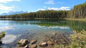 what are abiotic and biotic factors in lakes reference com