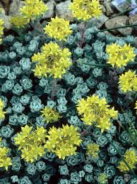 14 best rock garden images on pinterest rock garden plants