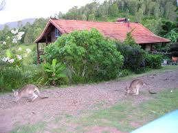 permaculture garden safe eco houses for sale in australia