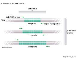 recombinant dna chapter ppt video online download