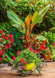 264 best container gardens images on pinterest garden container