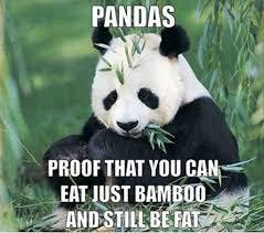 Panda Meme - 84 stupid panda memes