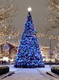 50 best beautiful christmas trees images on beautiful