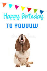 singing birthday text basset hound looking up and singing text happy birthday to you on a