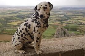 dog pictures beautiful photos